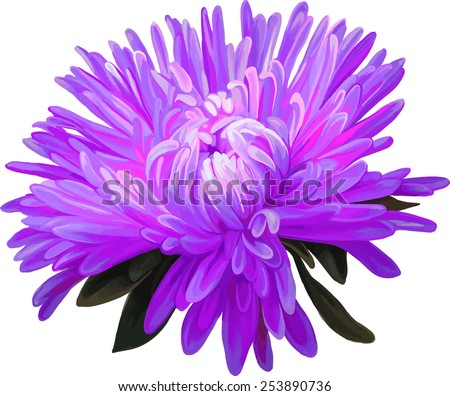 Purple Aster Flower Drawing Pink Aster Purple Flower