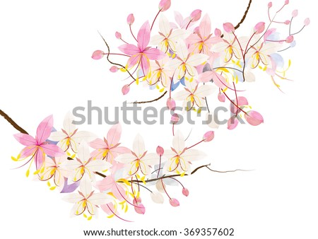 Pink cassia or wishing tree flower on white background,vector illustration