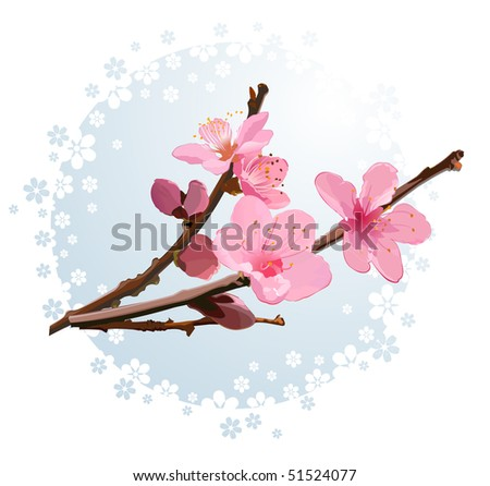 Pink cherry blossom - stock vector