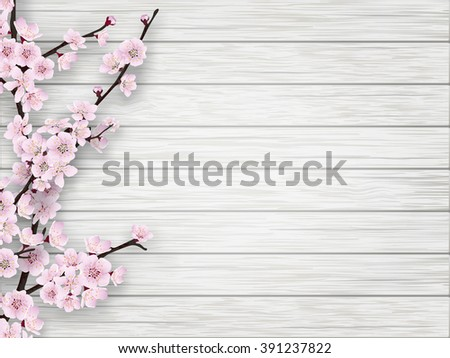 Pink cherry blossom branch on white old wood background. Springtime realistic vector illustration.