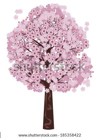 Pink cherry blossom tree, sakura in bloom on white background. - stock vector