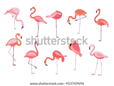 Pink flamingo set, vector illustration. Cool exotic flamingo bird in different poses decorative design elements collection. Pink flamingo isolated on white background - stock vector