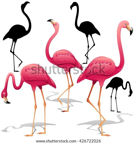 Pink Flamingos Vector illustration. Isolated Decorative design elements. Exotic Bird. Flamingo Shapes.  - stock vector