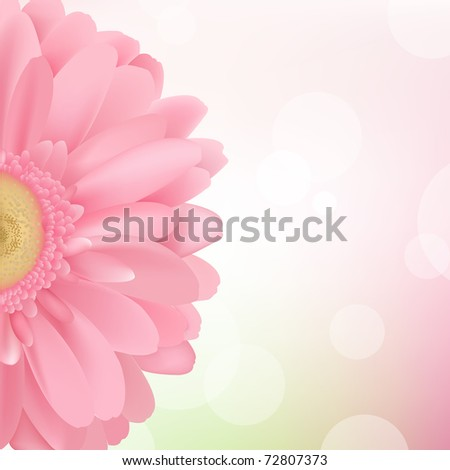 Pink Gerbera, Isolated On Pink Background, Vector Illustration - stock vector