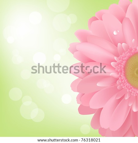 Pink Gerbera, Isolated On White Background, Vector Illustration - stock vector