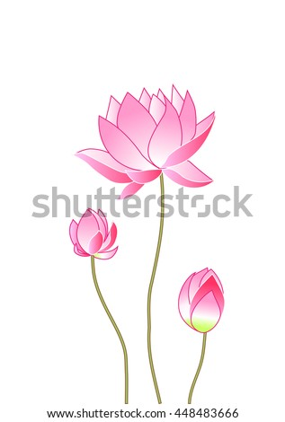 pink lotus flowers, vector illustration