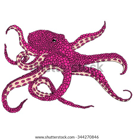 Pink octopus illustration - (Octopus vulgaris) isolated on white background - stock vector