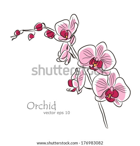 pink orchid - stock vector