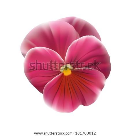 Pink pansy flower stock vector 2018 181700012 shutterstock pink pansy flower mightylinksfo
