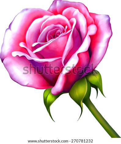 Pink Purple Rose Flower isolated on white background - stock vector