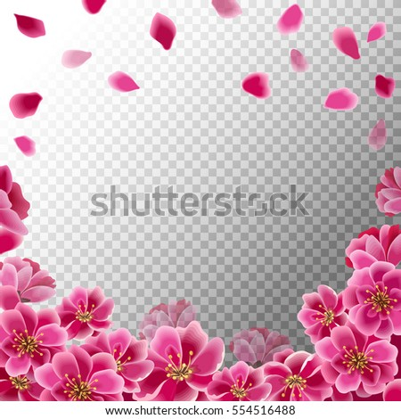 Pink Sakura Flowers And Falling Petals Isolated On Transparent Background Spring Blooming Vector Eps 10
