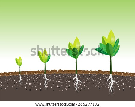 plant grow up in a moment, vector