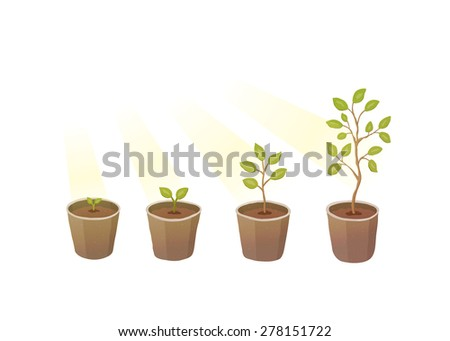 Plant growth - stock vector