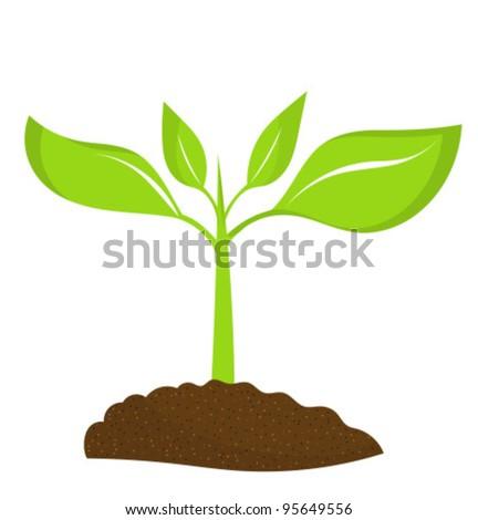 Plant Seedling Growing Soil Vector Illustration Stock ...