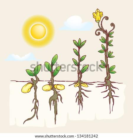 plantation growing under the sun - stock vector