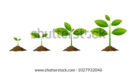 Plants growing in the ground isolated on white background