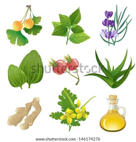 herbal medicine wiki