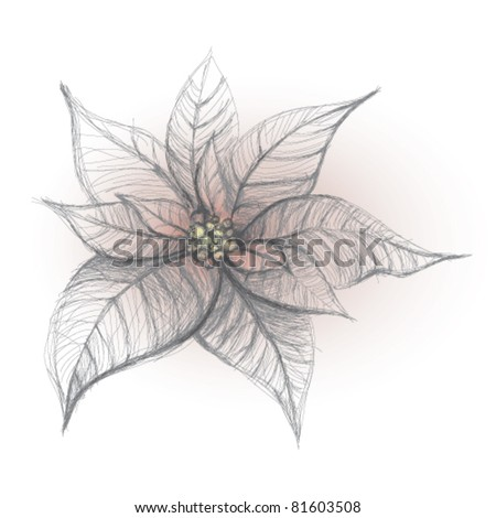 Poinsettia / Christmas flower background