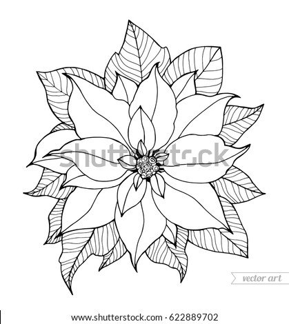 Poinsettia Isolated Christmas Flower Vector Artwork Coloring Book Page For Adult Black