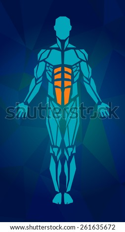 Polygonal anatomy of male muscular system, exercise and muscle guide. Human muscle vector art, front view. Vector illustration for sport equipment - stock vector