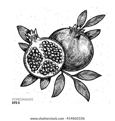 pomegranate drawing stock images royalty free images vectors shutterstock. Black Bedroom Furniture Sets. Home Design Ideas