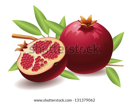 Pomegranate, Isolated Vector Fruit - stock vector