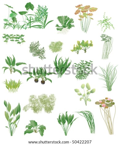 Pond and aquarium plants - stock vector