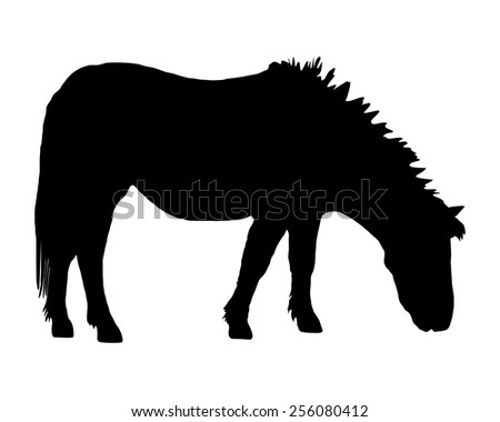 Pony grazing - stock vector