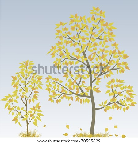 Poplar Tree - stock vector