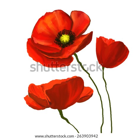 poppies vector illustration  hand drawn  painted watercolor