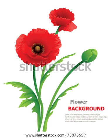 Poppy floral background - stock vector