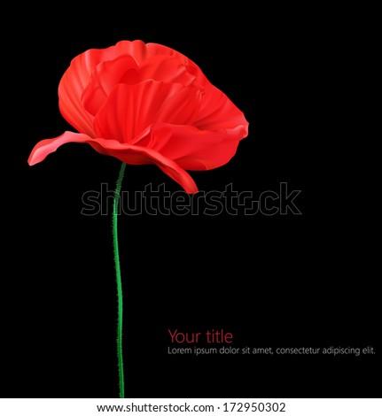 Poppy flower isolated on black background.  - stock vector