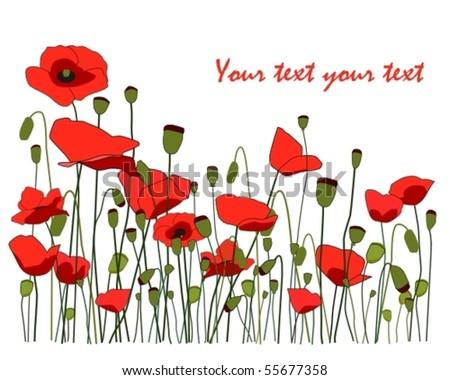 Poppy flowers - stock vector