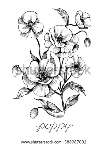 Poppy flowers vector sketch stock vector 588987002 shutterstock poppy flowers vector sketch mightylinksfo Image collections