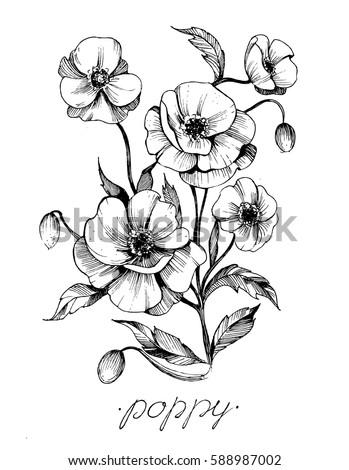 Poppy flowers vector sketch stock vector 588987002 shutterstock poppy flowers vector sketch mightylinksfo