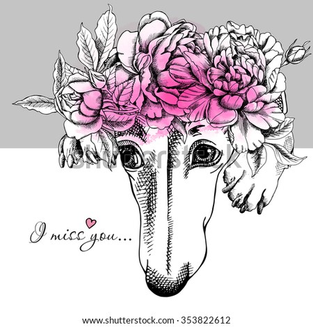 Portrait of a sad dog Greyhound and pink Peony flowers on gray background. Vector illustration.
