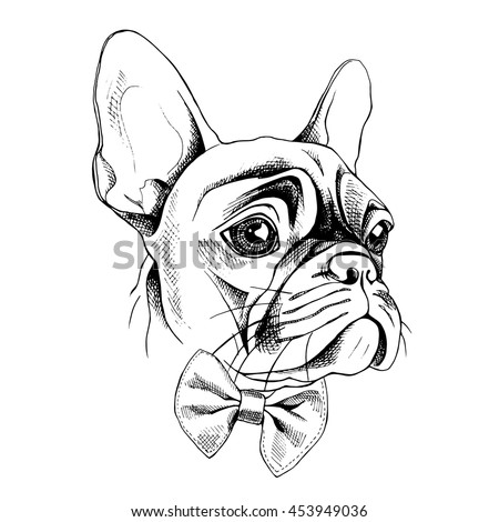 Frenchie in addition Foot Study 84174010 additionally Hd Images Of Bedroom With One Point Perspective View also  furthermore Angry Wolf Lineart Free 138307725. on head perspective