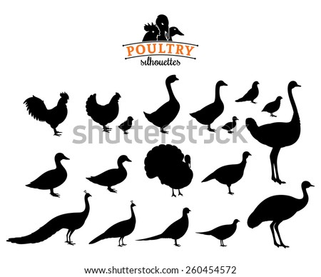 Poultry Silhouettes Isolated on White - stock vector