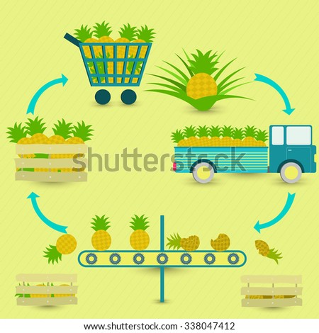 Process of pineapple. Pineapple production steps. Pineapple tree, harvest, transport, separation of healthy and rotten pineapples, sale at the grocery store. In a circular scheme. - stock vector