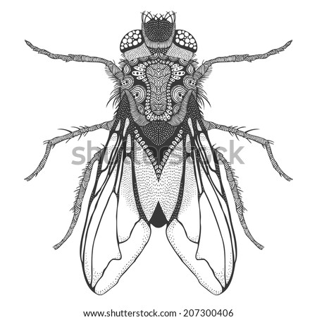 psychedelic fly isolated - stock vector