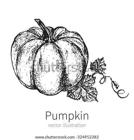 Pumpkin illustration isolated on background. Vector illustration.  - stock vector
