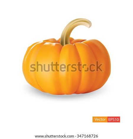 pumpkin isolated on white background. Vector illustration of pumpkin