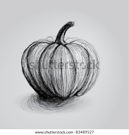 PUMPKIN / Realistic sketch - stock vector