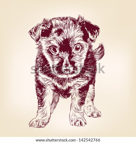 puppy dog hand drawn vector llustration realistic sketch - stock vector
