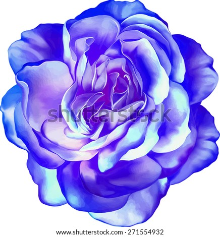 Purple blue Sexy and beautiful and rose bud isolated on white background. Vector illustration - stock vector