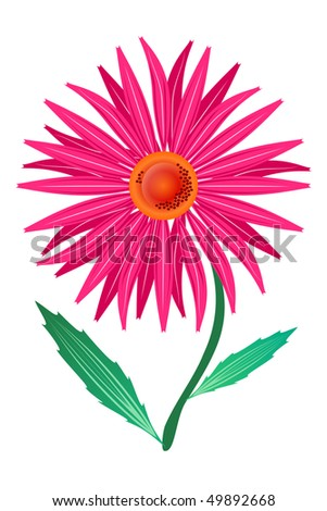 purple echinacea (Echinacea purpnrea) asymmetric isolated on the white background - stock vector