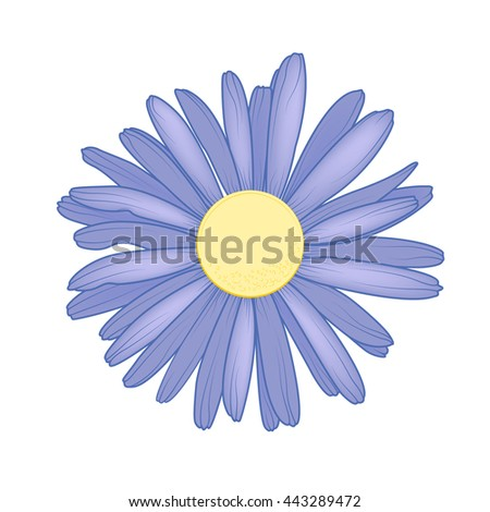 Purple violet chamomile daisy close up top view. Loves me loves me not flower. Isolated botanical floral design element. - stock vector