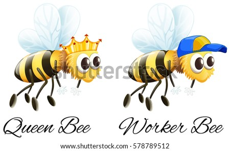 Queen bee stock images royalty free images vectors shutterstock queen bee and worker bee characters illustration ccuart Images