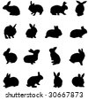 rabbit from all over the world - stock vector