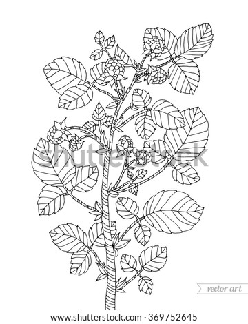 Blueberry Bush Leaves Coloring Pages